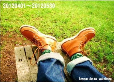 redwing1.jpg